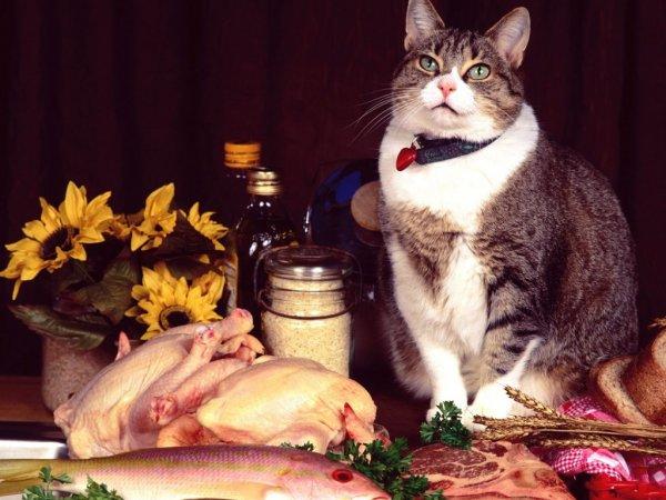 Сытый кот – март без забот: Благодарное животное привлечет достаток, отведет беду – эзотерик