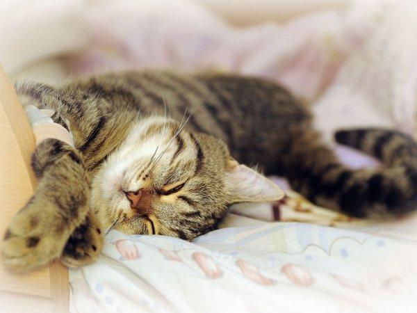 Грустная кошка - потискай немножко: Почему 1 марта нужно задобрить кота?