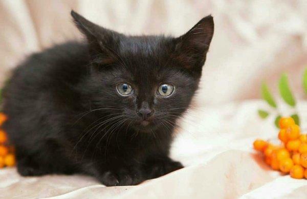 Чёрный кот – мужчина не жмот: Какой котик притянет богатого любовника в начале весны
