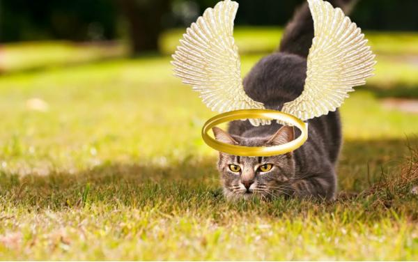 Котик беду предвидит. «Пушистый друг в доме самый настоящий экстрасенс» – эзотерик