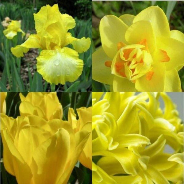 Букет на миллион или какие цветы расскажут о любви 8 марта