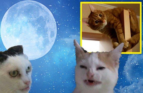 Царапки от котятки: В чём причина кошачьего баловства в начале марта?