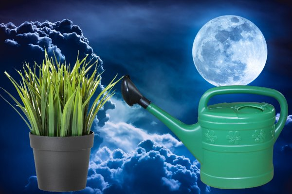 Лунная вода или чем поливать комнатные цветы