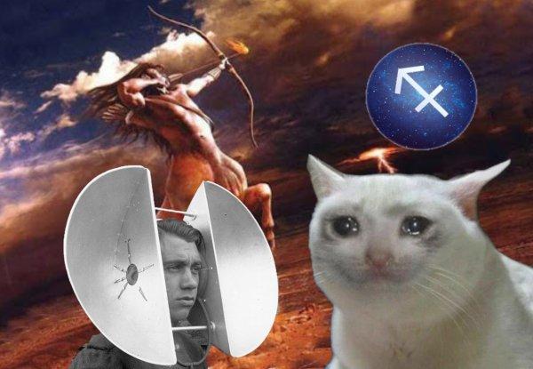 Локатор на ссоры или как коты будут спасать Стрельцов на выходных