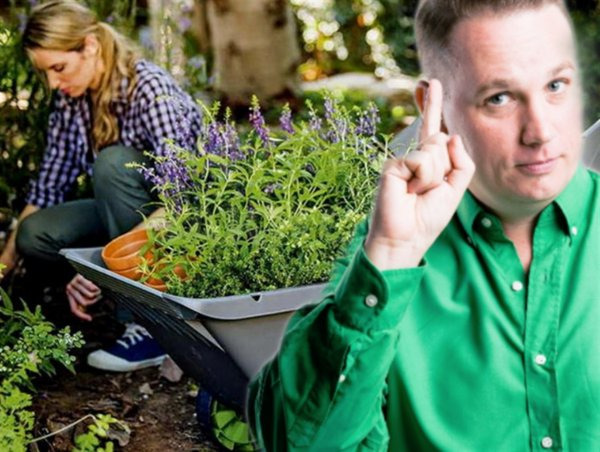 Опыт дачника: Урожай 2020 под угрозой, если нарушить законы Новолуния