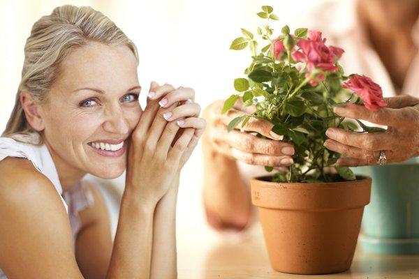 Комнатная роза подарит гармонию и счастье