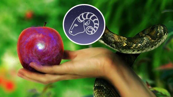Запретный плод сладок: Какие предметы испортят ауру Овна