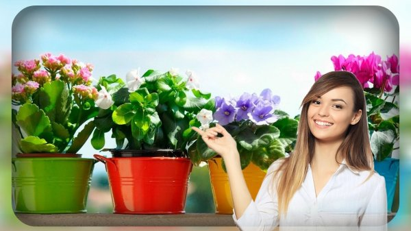 Цветочное царство: советы эзотерика помогут обезопасить дом во время карантина