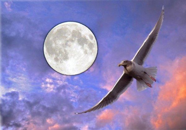 Словно птица в небесах: 13 апреля важно не «потеряться» в желаниях