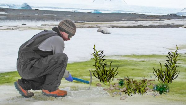 Снег в Антарктиде стал зелёным благодаря растительной деятельности