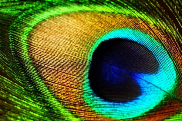 Перья павлина вдохновили разработчиков на создание датчиков-опалов