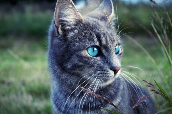 Ученые заявили, что кошки обосновались рядом с людьми более 14 500 лет назад