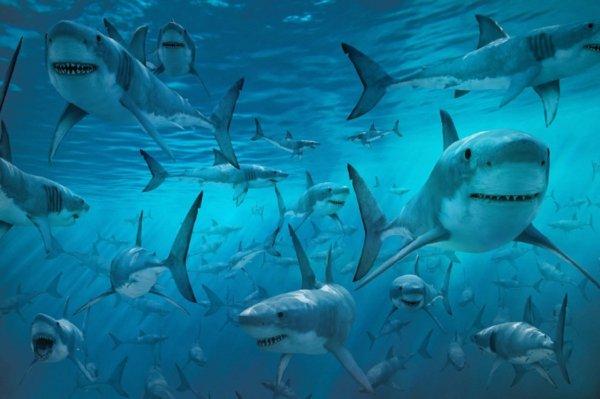 Популяция белых акул может вырасти из-за глобального потепления