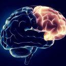 Ученые разгадали тайну уцелевшего 2600-летнего фрагмента мозга человека