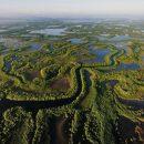 Ученые: Болота Миссисипи уйдут под воду из-за глобального потепления