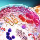 Найден ген, блокирующий похудение при интервальном голодании