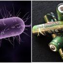 Немецкие ученые представили «живые» батарейки в виде бактерий