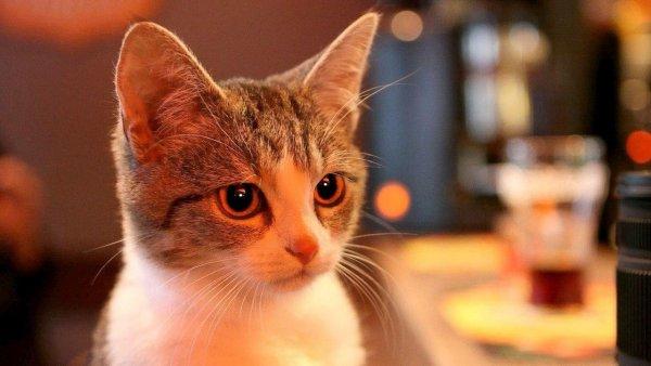 Зоозащитники предупредили, чем опасно для кошек расставание с хозяином
