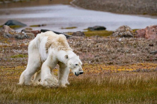 Животные массово мигрируют на север из-за глобального потепления