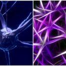 Американские ученые создали пульт дистанционного управления нейронами