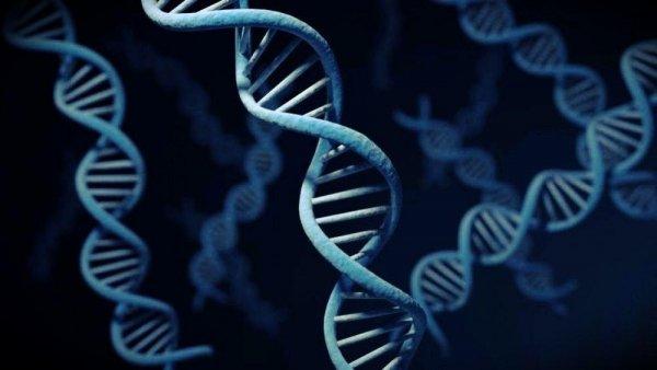 Новые исследования раскрыли правду о происхождении ДНК и РНК