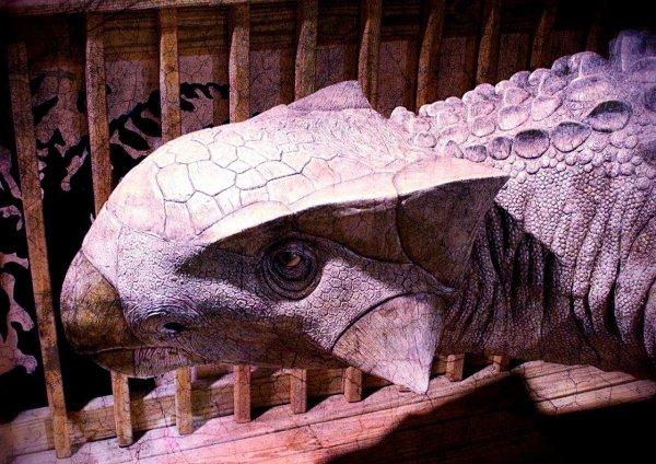 Ученые СПбГУ воссоздали мозг динозавра в 3D-модели
