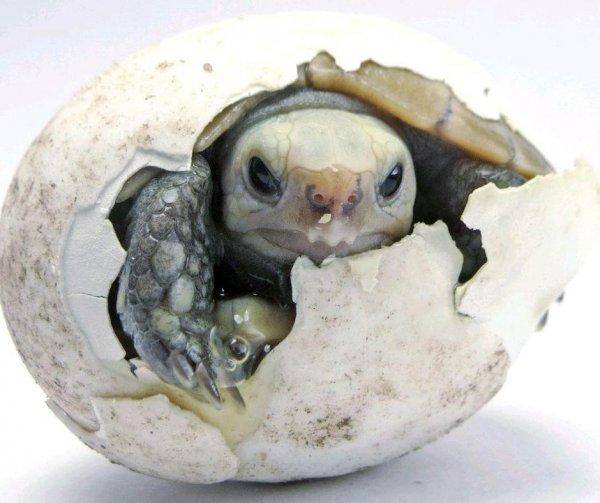 Яйца первых динозавров были мягкими как у черепах